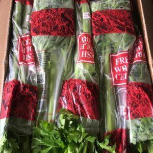 Jual Celery Stick Import